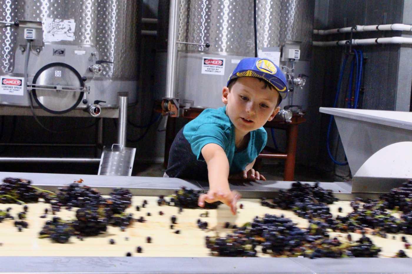 child sorting fruit