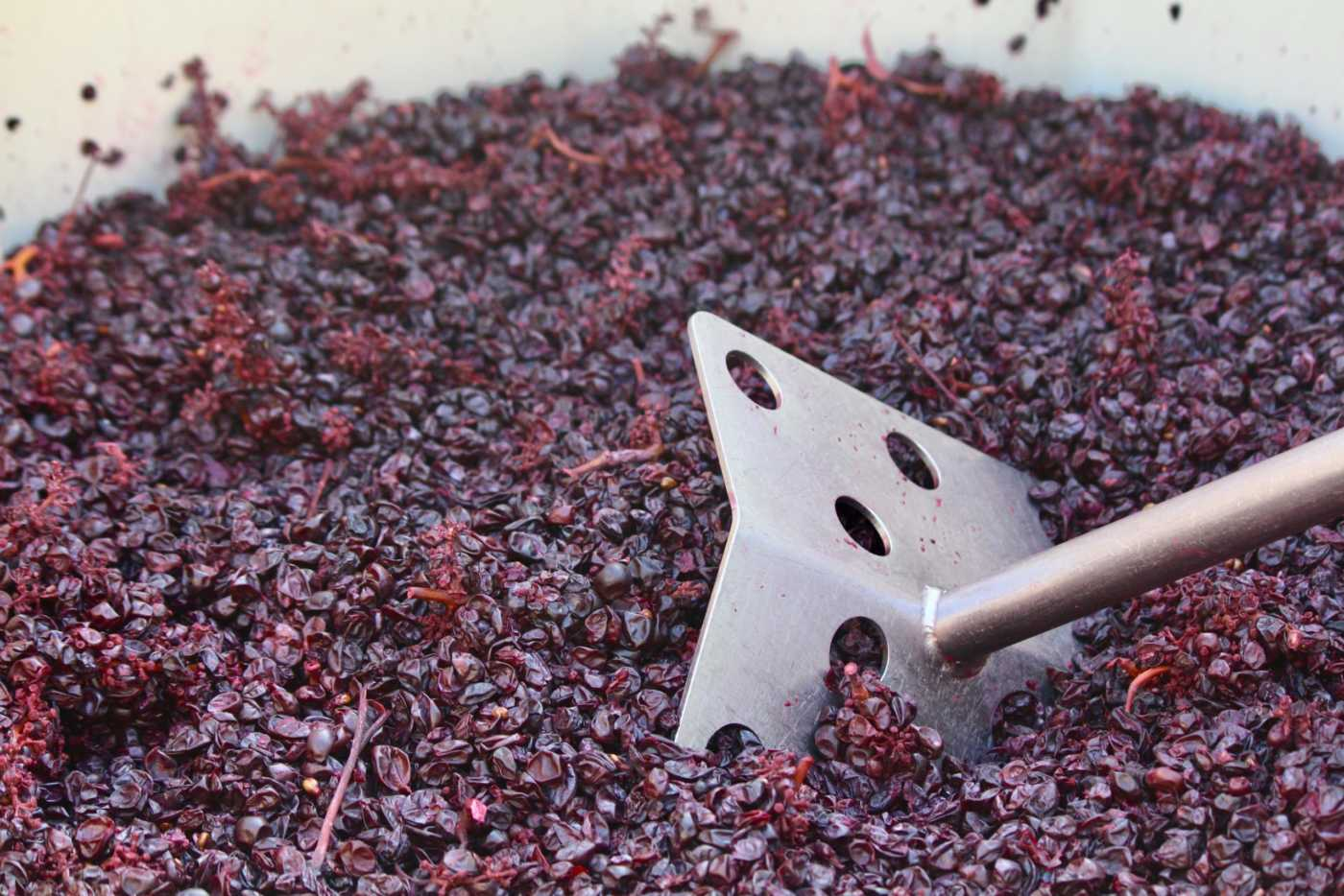 pushing down crushed grapes
