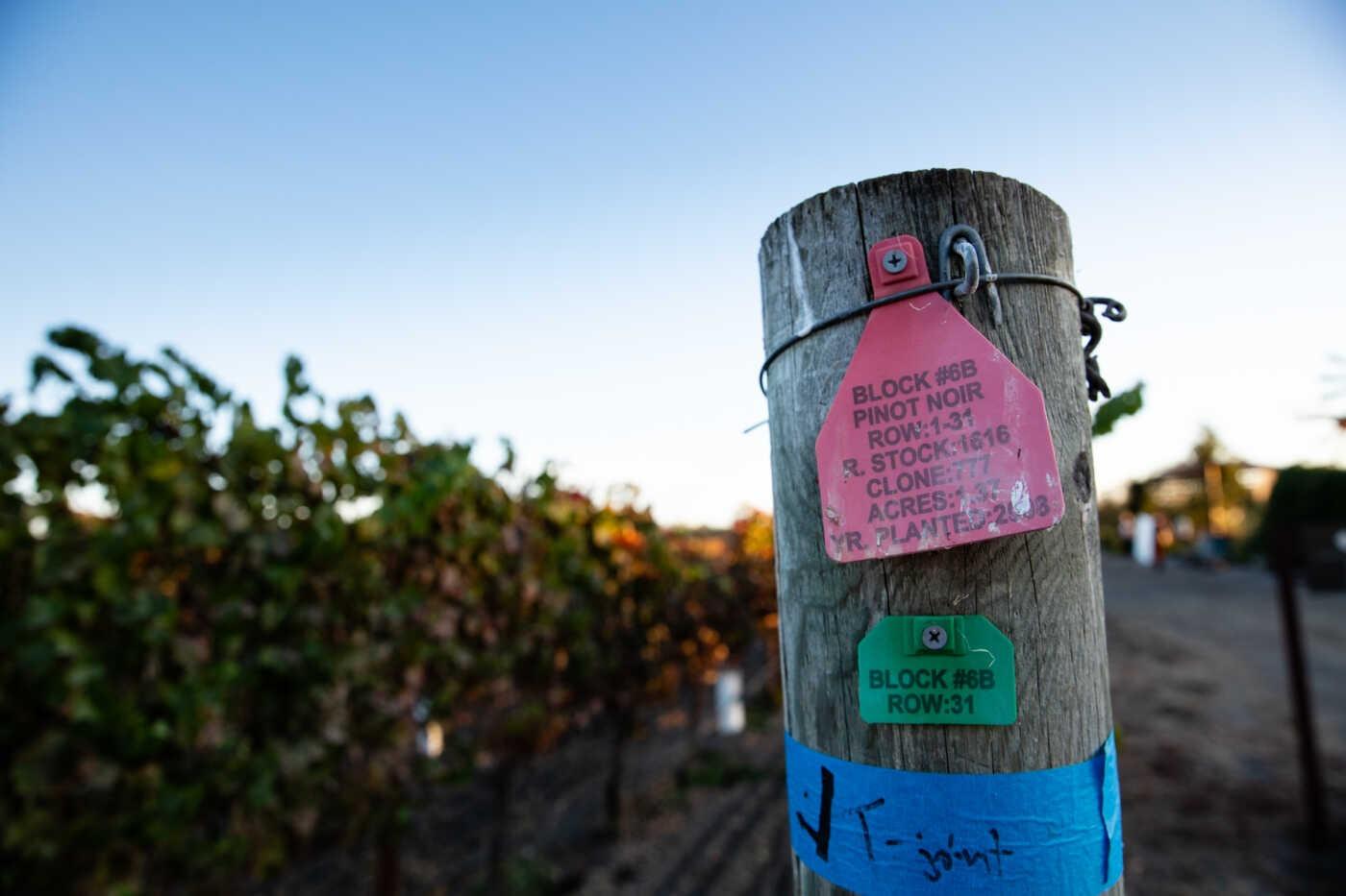 vineyard endpost with Pinot Noir