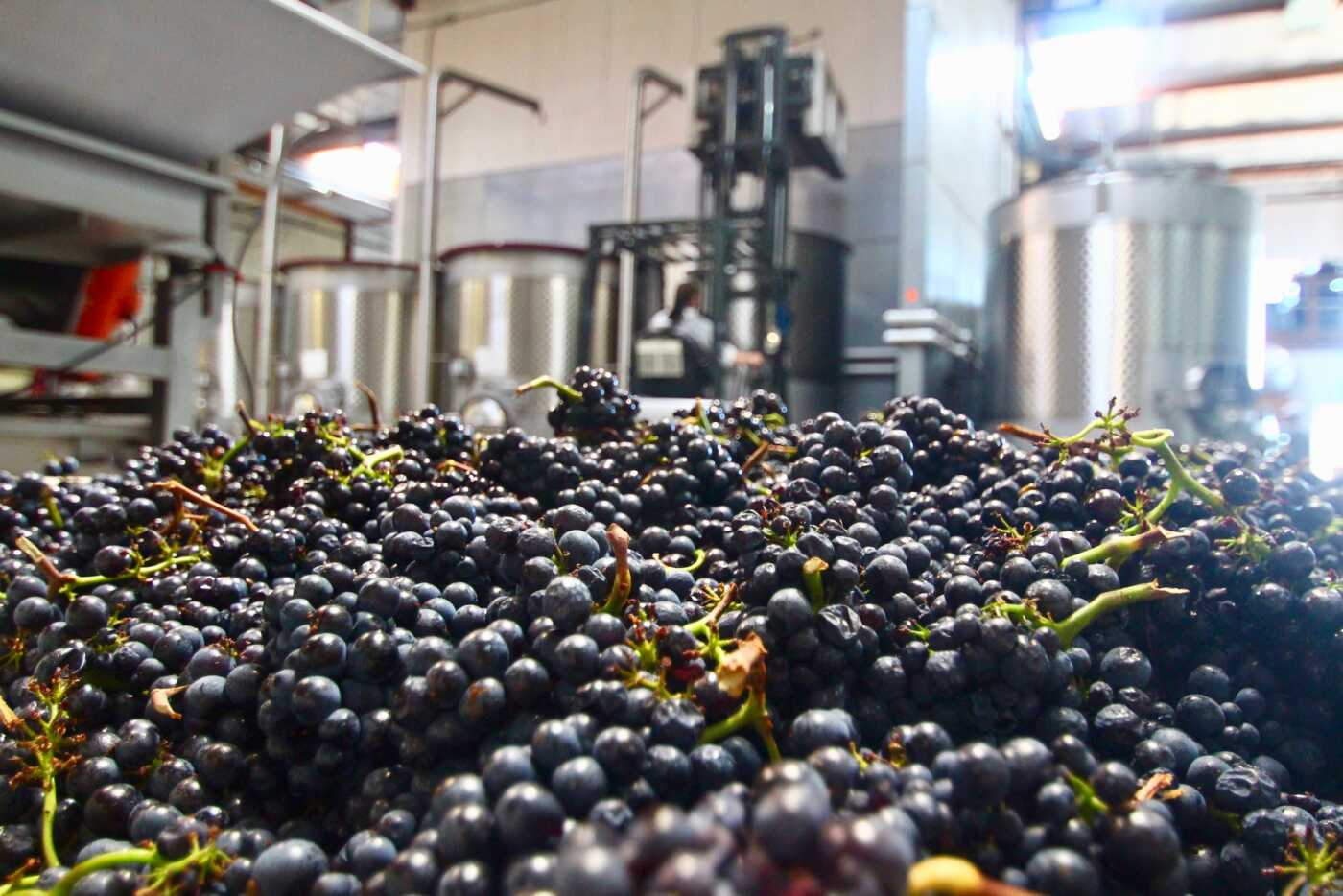 pile of grapes with forklift in background